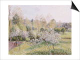 Apple Trees in Blossom, Eragny, 1895 Posters par Camille Pissarro