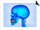 Cráneo humano Láminas por Matthias Kulka