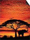 Elephant Under Broad Tree Prints by Jim Zuckerman