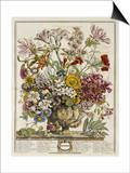 Hand Colored Engraving of Bouquet- October, 1730 Prints by Robert Furber