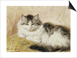 A Cat, 1893 Posters by Henriette Ronner-Knip