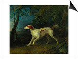 A Brown and White Setter in a Wooded Landscape Prints by Sawrey Gilpin