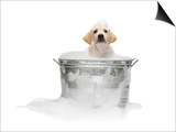 Puppy Taking Bath Poster by Lew Robertson