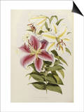 A Monograph of the Genus Lilium, Late 19th Century Art by Henry John Elwes