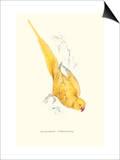 Rose Ringed Parrot (Yellow) - Psittacula Krameri Kunst af Edward Lear