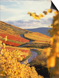 Vineyards in autumn in Esslingen/Neckar Art by Herbert Kehrer