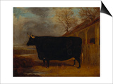 A Black Bull Standing by a Cowshed, an Extensive Landscape Beyond Posters by James Pollard
