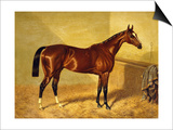 Orlando, a Bay Racehorse in a Loosebox Posters by John Frederick Herring I