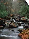 Stream Running Through Forest Art by Jay Dickman