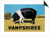 Hampshires Art