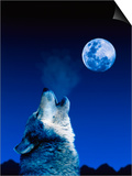 Wolf Howling at the Moon Kunstdrucke von Jeff Vanuga