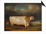 Comet' a Light Roan Short-Horn Bull in a Landscape, 1811 Poster by Thomas Weaver