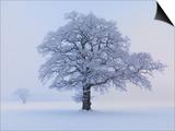 Oaks in winter landscape Posters by Hans Strand