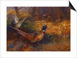 A Cock and Hen Pheasant at the Edge of a Wood Prints by Archibald Thorburn