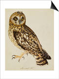 A Short-Eared Owl Art by Christopher Atkinson
