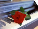 Red Rose on Piano Posters