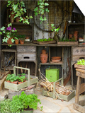Potting Shed in Garden at Hampton Court Flower Show Affiches par Mark Bolton