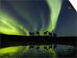 Horses under the Aurora Borealis Posters