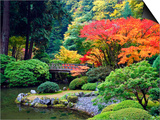 Fall Colors at Portland Japanese Gardens, Portland Oregon Posters by Craig Tuttle