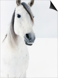White Horse in Snow Poster by Birgid Allig