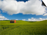 Old Red Barn in Spring Wheat Fields Posters by Terry Eggers