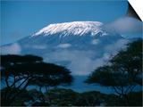 Kilimanjaro and Acacia Trees Print