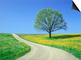Country road and tree, spring Print by Herbert Kehrer