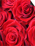 Bouquet of Red Roses Prints by Clive Nichols