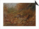 A Woodcock Nesting in Autumn Leaves Art by Archibald Thorburn