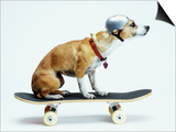 Dog with Helmet Skateboarding Kunstdrucke von Chris Rogers