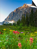 Wildflowers in Cavell Meadows with View of Mount Edith Cavell, Jasper National Park, Alberta, Canad Poster by Scott Dimond