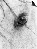 A Close Shot of a Horses Eye with Snow Flakes Taken in Alberta, Canada. Prints by Wayne Simpson