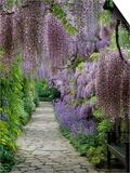 Spring garden Posters