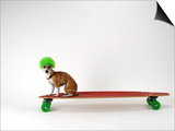 Chihuahua on a Skateboard Kunstdrucke von Chris Rogers