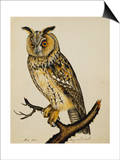 A Long-Eared Owl (Strix Otus) Schilderij van Christopher Atkinson