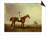 A Bay Racehorse with a Jockey Up on a Racehorse Poster by Lambert Marshall