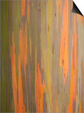 Rainbow Eucalyptus Tree Bark Posters by Lew Robertson