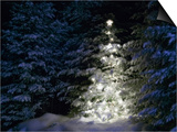 Illuminated Christmas Tree in Snow Prints by Larry Williams