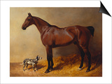 A Bay Hunter and a Spotted Dog in a Stable Interior Print by John Frederick Herring I