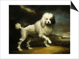 A Standard Poodle in a Coastal Landscape Prints by James Northcote