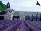 Lavender Field at Abbeye du Senanque Prints by Owen Franken