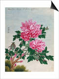 Chinese Watercolor of Pink Peonies Prints