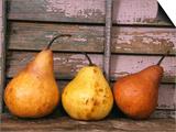Studio-Pears Poster by Kim Koza