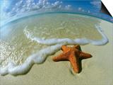 Starfish on Edge of Shore Prints