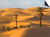 Palm Trees in Desert Posters af Frank Lukasseck
