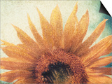 Sunflower Prints by Jennifer Kennard