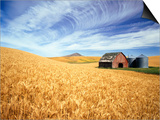 Wheat Field Surrounding Barn Prints by Craig Tuttle