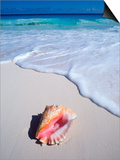 Mexico, Yucatan Peninsula, Carribean Beach at Cancun, Conch Shell on Sand Poster by Chris Cheadle