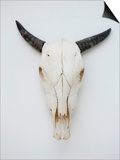 Close-up of a cow skull mounted on the wall Poster by Fabrice Lerouge