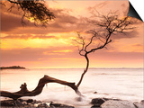 Tree on Anaehoomalu Beach Posters by Frank Lukasseck